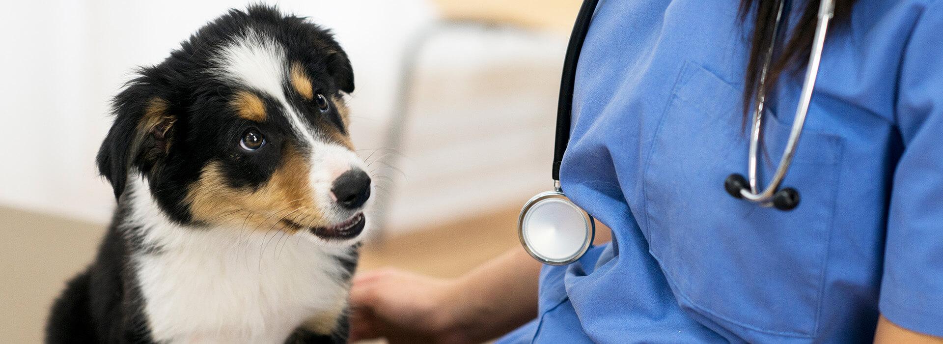 vétérinaire à Liège